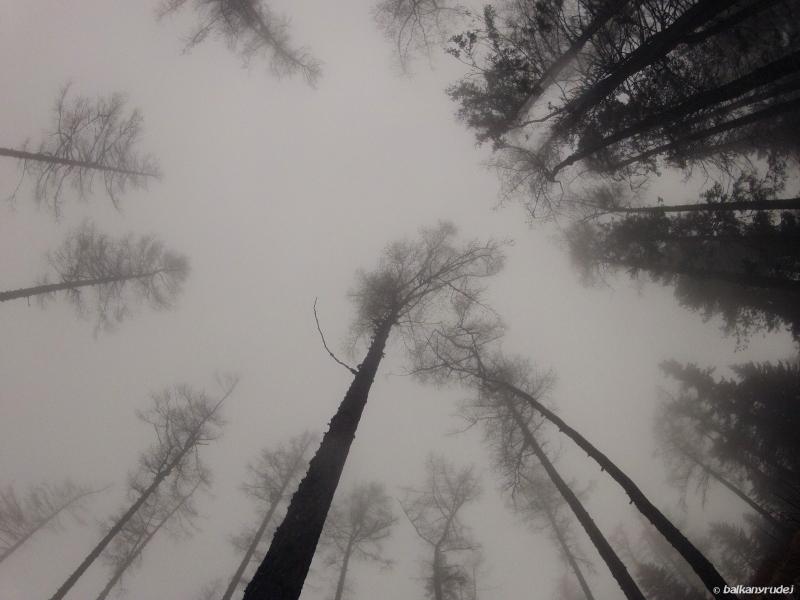 Las mglisty Słowacja