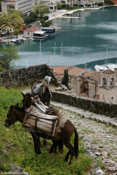 forteca Kotor
