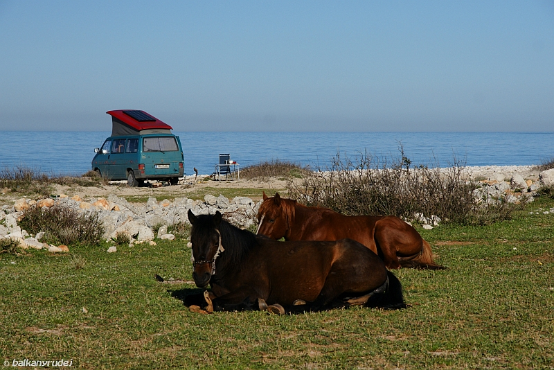 konie Albania