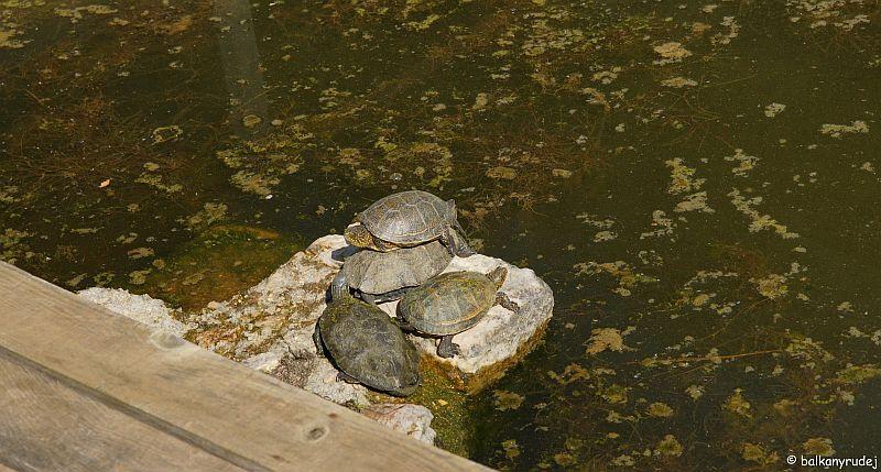 żółwie Butrint