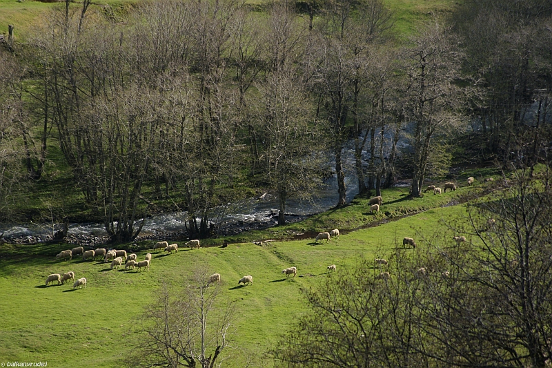 Dolina Bistricy